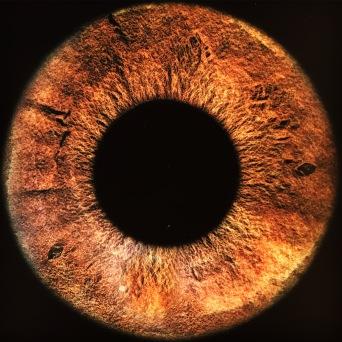 Iris (micro photography)