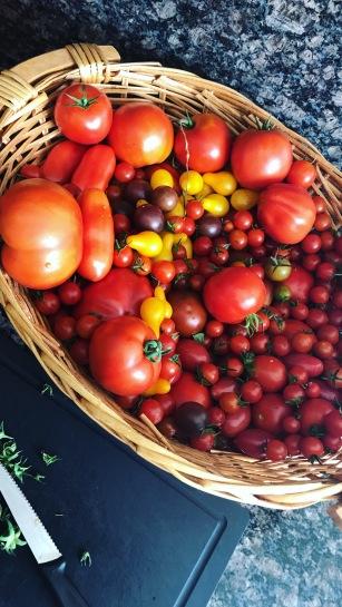 tomatoeees