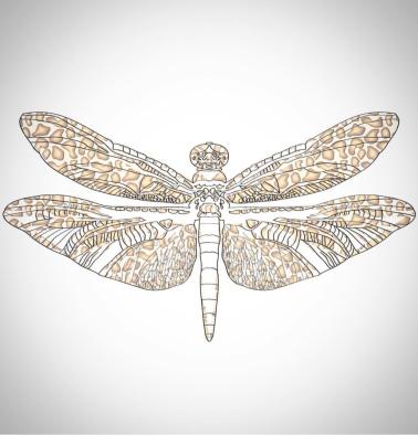 leopardragonfly