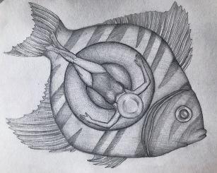 Fischersfritz Frau Frida fischt frische Fische