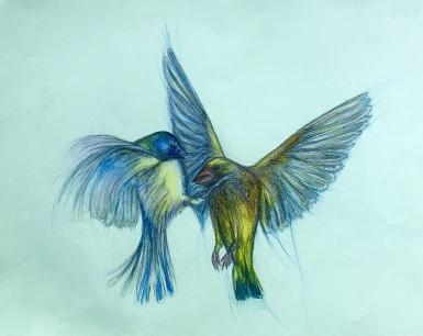 fighting birdoes